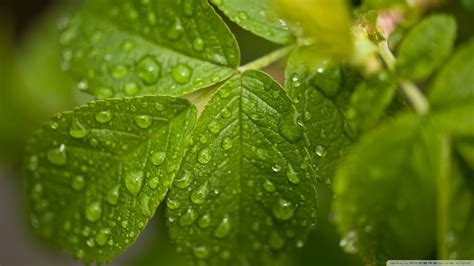 green wallpaper for eye relaxation download water drops on leaves wallpaper 1920x1080