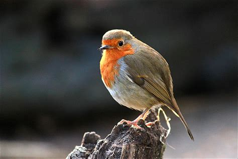 wwwwild bird photocom3gp bird photo tips