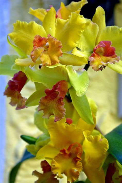 plant food that comes with flowers best 10 orchids garden ideas on pinterest orchid care