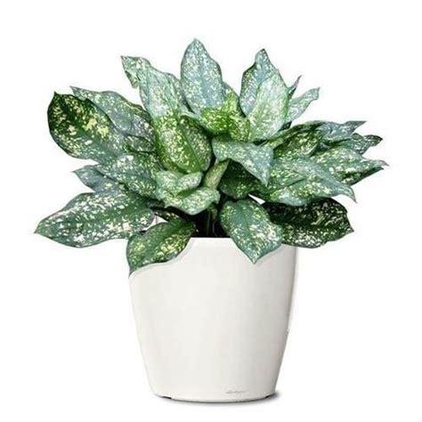 decorative plants with name in india decorative plants succulents plants kalyani nagar pune