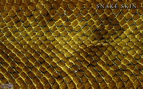 wallpapers snake skin wallpapers snake wallpapers animal spot