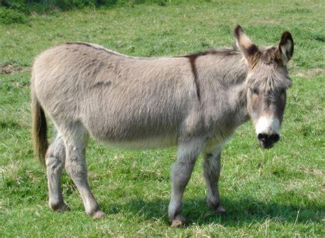 Rent A Treehouse Uk - donkey church farm stow bardolph