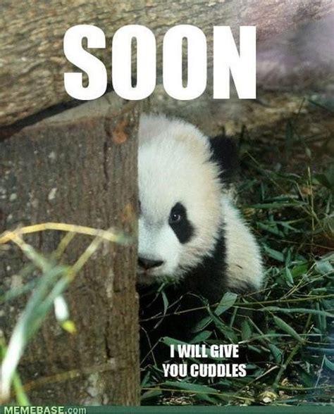 Panda Meme - panda memes and pickup lines panda pinterest memes
