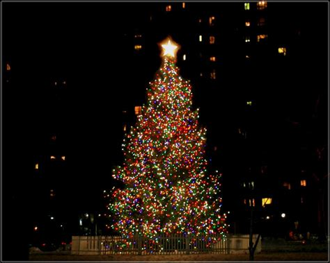 panoramio photo of christmas tree in stuyvesant town at