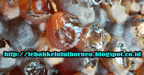madu lebah kelulut asli borneo kami adalah produsen madu