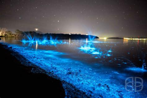 natures rhapsody  blue tasmania shoreline glitters