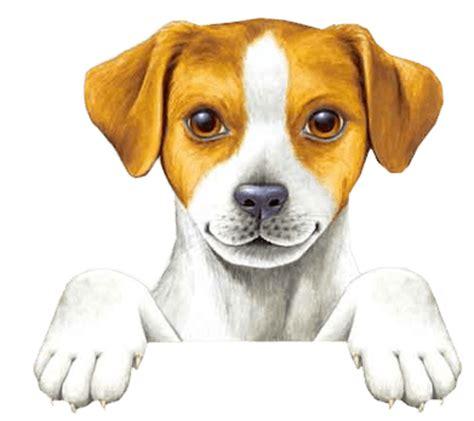 imagenes png animales zoom dise 209 o y fotografia gatos y perros png pets mascotas