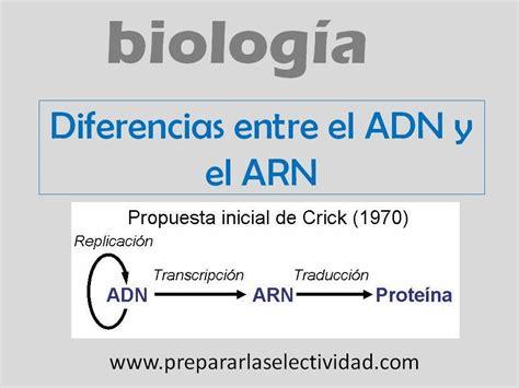 diferencia entre imagenes informativas y expresivas diferencias entre el adn y el arn youtube