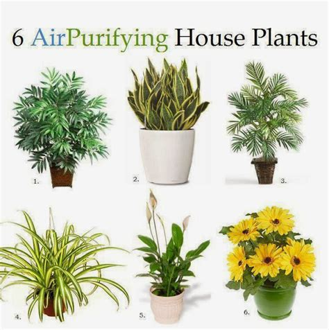Air Purifying L by The Universe Inside Your Mind 6 Air Purifying House Plants