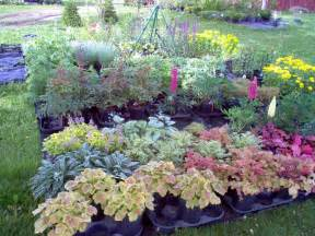 Perennials plants that full sun to partial shade to full shade