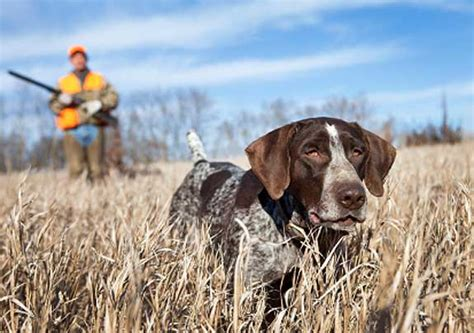 how to dogs to hunt beaverdam kennels