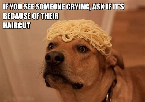 silly pictures silly things on silly animal pictures 15 pics