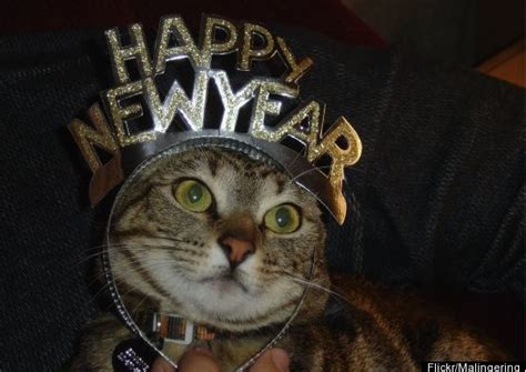 the year of the cat new year happy mew year i cat
