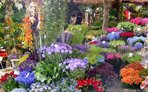 beautiful flower garden flower