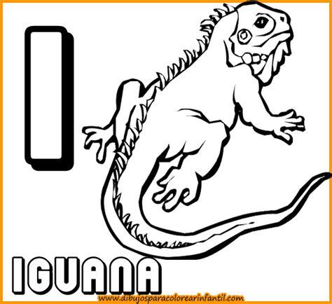imagenes de animales por la letra b animales que empiecen con la letra i imagui