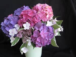 Pictures Of Hydrangeas In A Vase in a vase on monday hydrangea gift pbmgarden