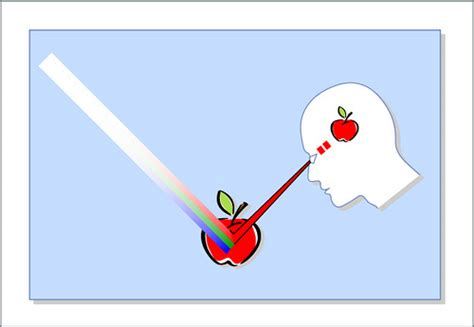 color perception color perception interaction between light source