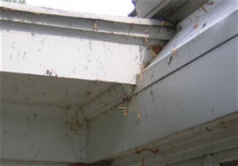 how to clean spider webs from house siding spider web removal carmel residential and commercial maintenance david hazen group