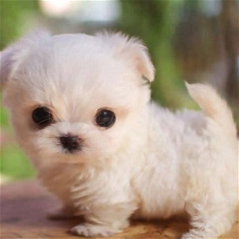 imagenes para el perfil de whatsapp mas lindos del whatsapp imagenes para perfil de lindos cachorros feliz