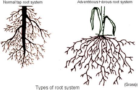 roots of style do you live in a minimalist traditional house what are respiratory roots how do they differ from normal