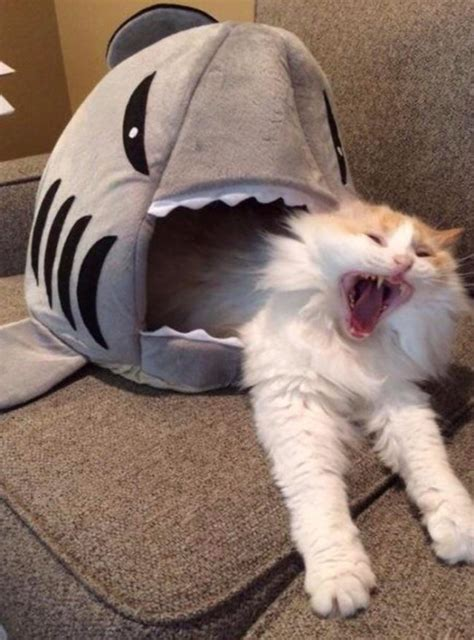 cat shark bed funny pictures march 29 2017