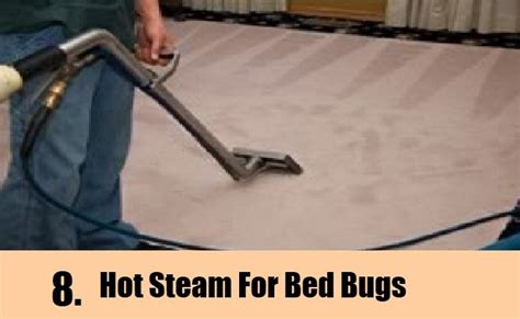 will steam kill bed bugs 9 home remedies to kill bed bugs natural treatments