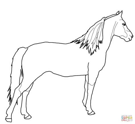 Coloring Pages Of Morgan Horses | morgan horse coloring pages
