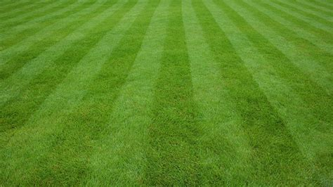 Garden Of Lawn Care Lawn Care Solutions Protech Property Solutions