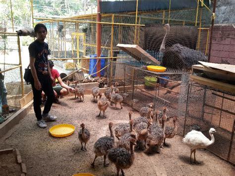 Jual Pakan Burung jual burung unta jual ayam hias