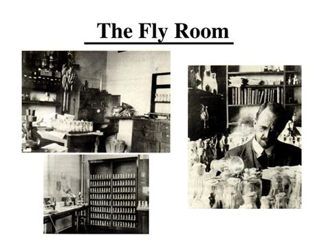 The Fly Room ppt conceptual change in the fly room powerpoint