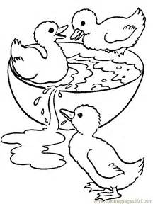what color are ducks free coloring pages of baby ducks