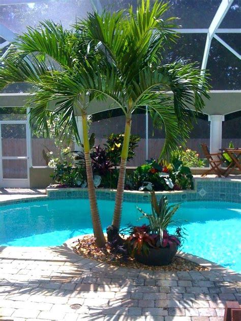 tropical trees for backyard tropical trees for backyard palm tree backyard small