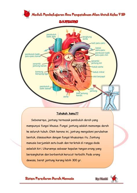 Ensiklopedia Materi Kelas V Sd modul sains circulatory system 109151415406