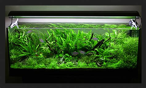 design inspired by nature aquarium the aquascaper series styles