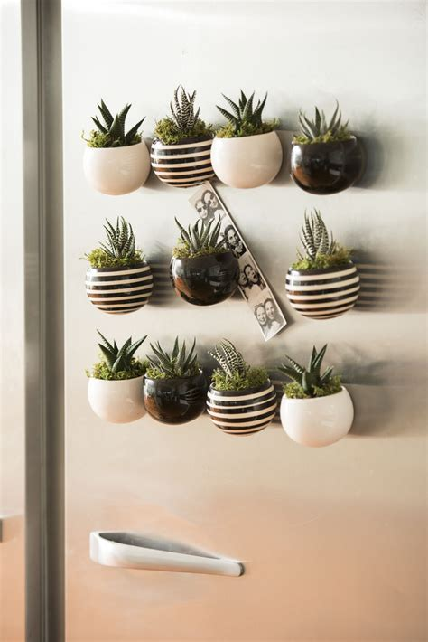 indoor succulent garden mini magnet succulent garden set