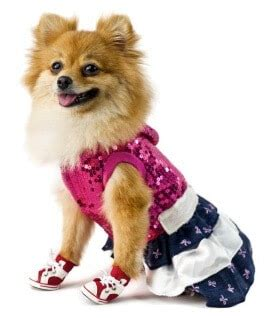 pomeranian clothing fur babies how dogs really are like children terribly terrier
