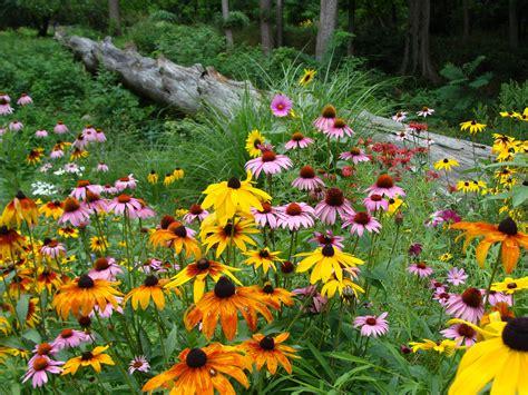 image gallery echinacea garden