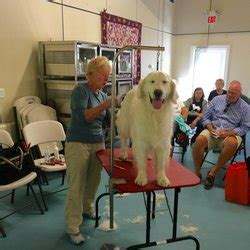 ma golden retriever rescue yankee golden retriever rescue inc animal shelters 110 chapin rd hudson ma