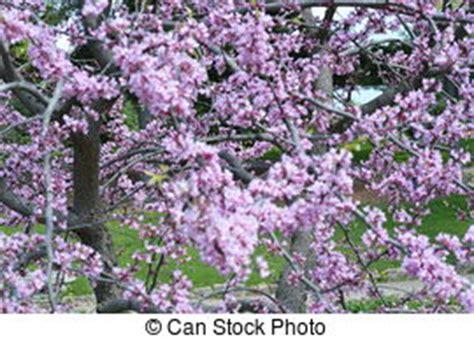 serenelle fiori serenelle immagini e archivi fotografici66 119 serenelle