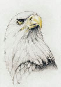 25 best ideas about eagle drawing on pinterest eagle