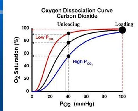 bohr effect diagram oxygen dissociation physiology ii with baer at