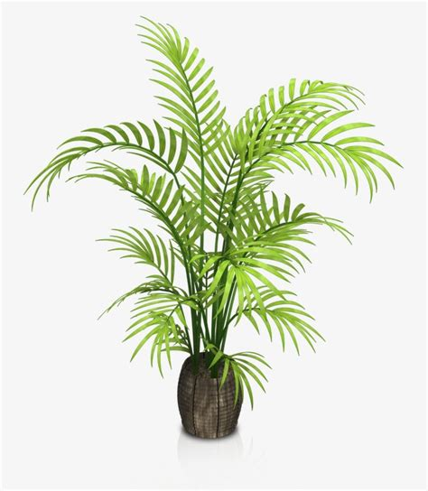 Indoor potted plants, Flower, Grass, Plant PNG Image and Clipart for Free Download