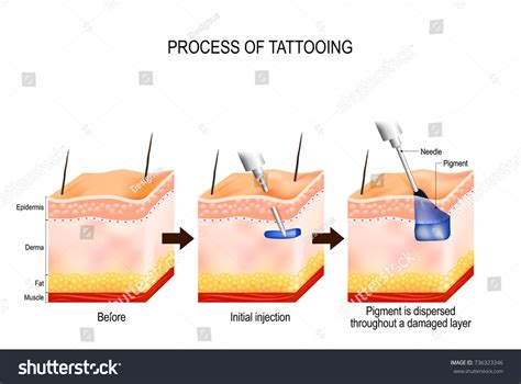 tattoo process tattooing process causes damage stock