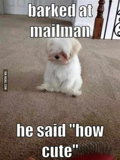 Animal Meme Pictures - best 25 funny animal quotes ideas on pinterest funny