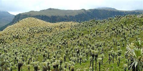 Batu Parimo tundra di ekuador ini adalah rumah bagi ratusan tanaman langka merdeka