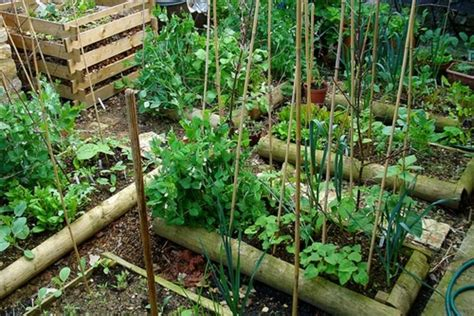 Vegetable Garden Covered Layer White Snow Shabby Chic Beds What Type Of Soil For Vegetable Garden