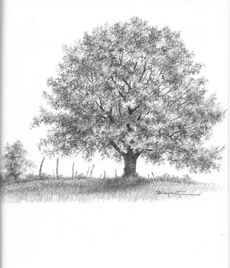 realistic oak tree drawings drawing nature joshua nava