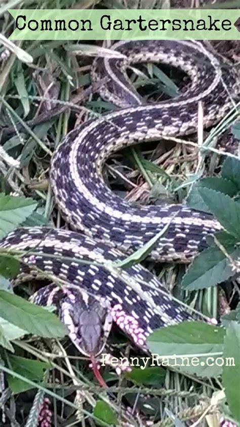 Garden Snake Tennessee Tn Wildlife Garter Snake
