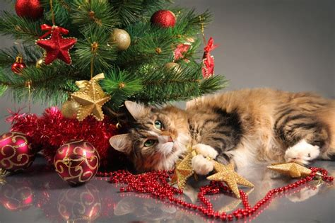 funny wayscto keep cats off christmas tree best ways to spend the holidays with your cat cattime