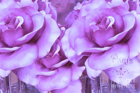 Dreamy Purple dreamy shabby chic purple lavender roses dreamy